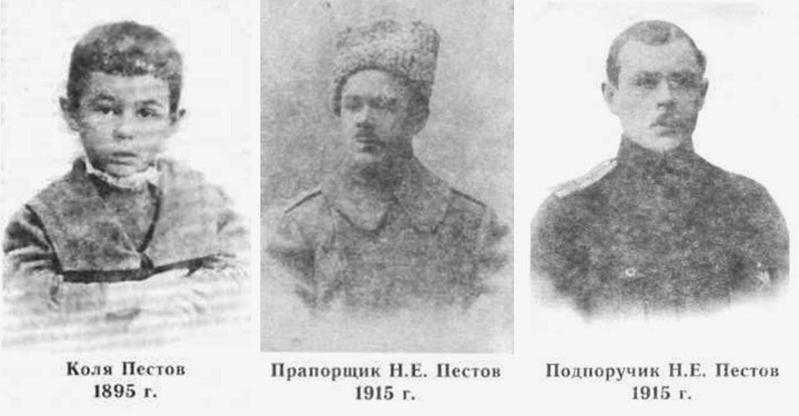 пестов николай евграфович биография