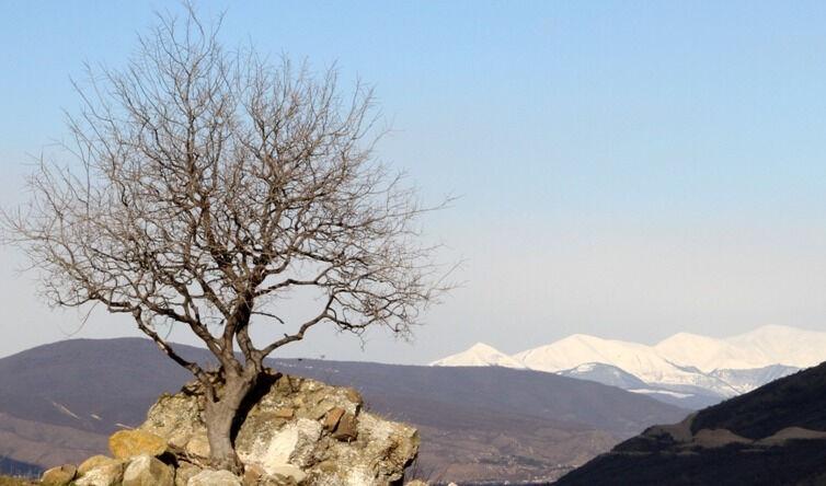 бодбийский монастырь в грузии